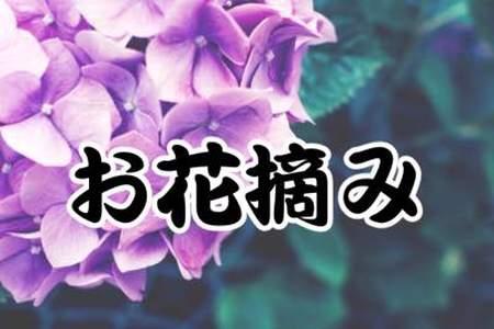 摘み トイレ お花