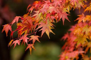 最も「秋」感がないと思う有名人ランキング