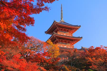 秋は紅葉シーズン!! 全国の「もみじ寺」で最も検索されたのは?